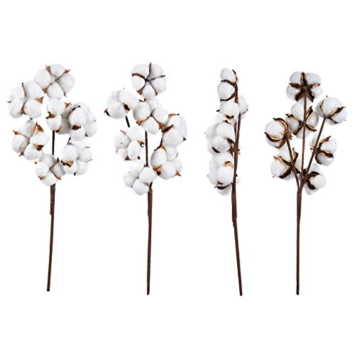 Juvale Cotton Stems - 4-Pack Cotton Flowers, 7 Balls per Stem, Farmhouse Style Display Vase Filler, Rustic Decorations Home, Office, 16 inches