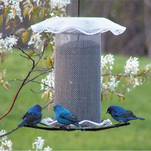 (Birds Choice 3 qt. Forever Nyjer Feeder Clear Color)
