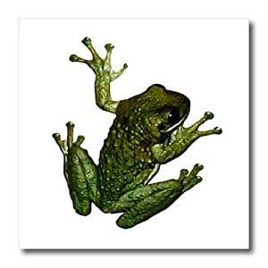 ht_867_3 Frogs - Green Frog - Iron on Heat Transfers - 10x10 Iron on Heat Transfer for White Material