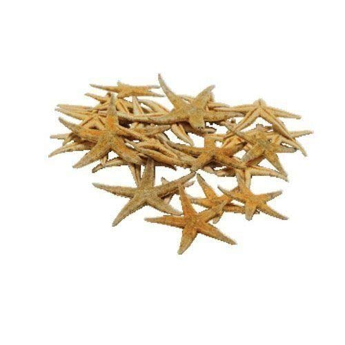 PMLAND 30 Pieces of Real Starfish for Under the Sea Party Beach Themed Wedding Decorations Craft Projects Size Varied 1-2 Inches