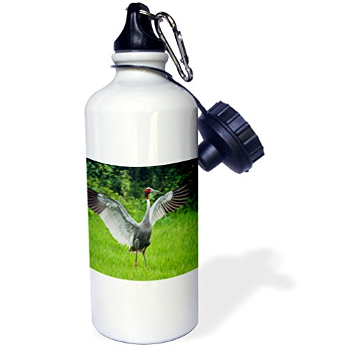 Danita Delimont - Birds - Indian Saras Crane, stretching wings, Keoladeo National Park, India. - 21 oz Sports Water Bottle (Keoladeo National Park)