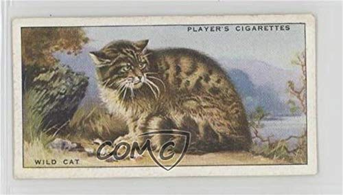 Wild Cat Ungraded COMC Poor to Fair (Trading Card) 1939 Player's Animals of the Countryside - Tobacco [Base] #18 from Player's Animals of the Countryside