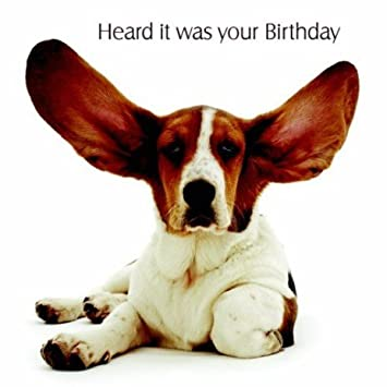 Basset hound birthday card big ears amazon kitchen home basset hound birthday card quot bookmarktalkfo Gallery
