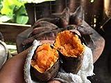 3 oz. gold potato ipomoea batatas sweet fresh root vegetable