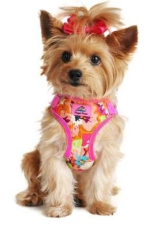 Doggie Design Wrap and Snap Choke Free Dog Harness - Aruba Raspberry - Choke Snap