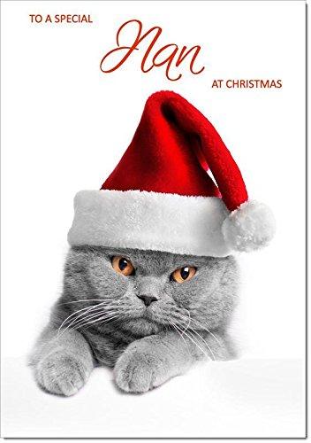 Nan Christmas Di Gatto Con Cappello Di Babbo Natale Dimensione