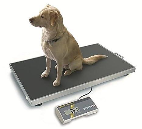 BASCULAS de piso de animal EOS300K100NXL de núcleo escalan hasta 300 kg - 100 g precisión: Amazon.es: Oficina y papelería