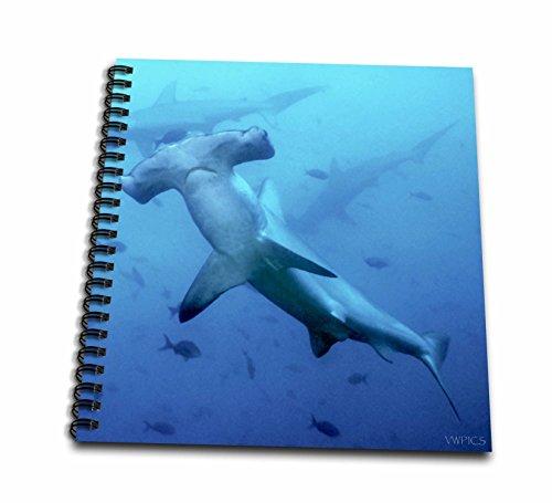 "3dRose db_45845_1 Scalloped Hammerhead Sharks.(Sphyma lewini).Galapagos Islands-Drawing Book, 8 by 8"""