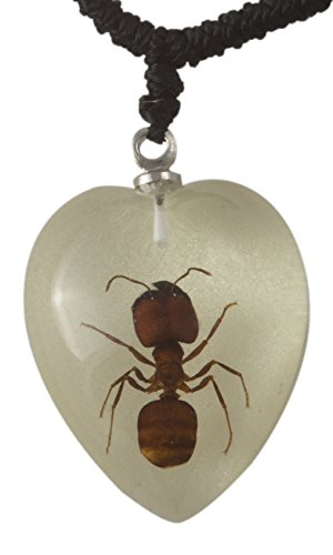 Small Necklace Ant on a White Background Suspended on a Black Braided Cord That Adjusts up to (Black Spider Necklace)