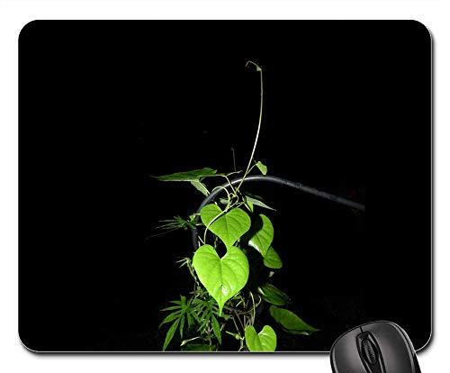 Mouse Pad - Plant Green Vine Vining Leaf Botany