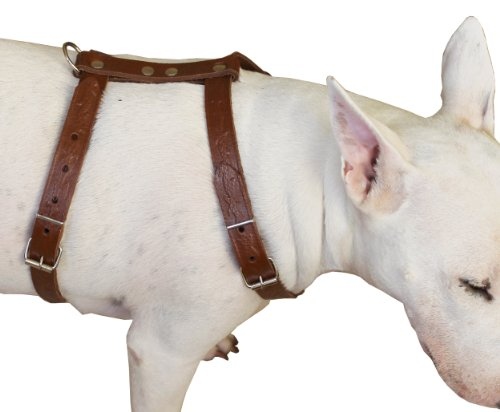 """Genuine Tooled Leather Dog Harness Medium. 22""""-30"""" Chest, 3/4"""" Wide Straps, Boston Terrier"""