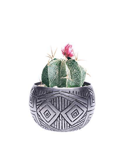 Taomukti – Bohemian Cactus Succulent Pot – 3 Inch Artisan Boho Shelf Decorations – Decorative Sage Bundles, Palo Santo, Potpourri Bowl – Modern Air Plant Holder – Geometric Small Plant Pot