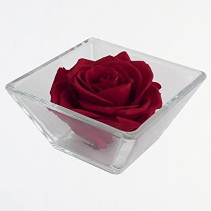 Unique Single Red Rose In Glass Square Vase Preserved To Last