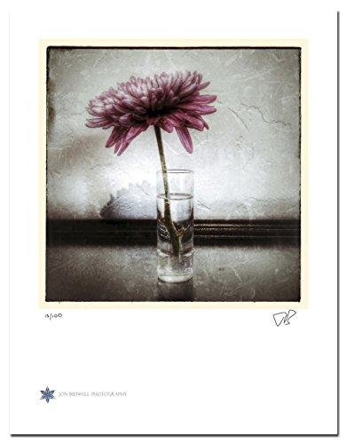 Still Life (Daisy 04 Color)
