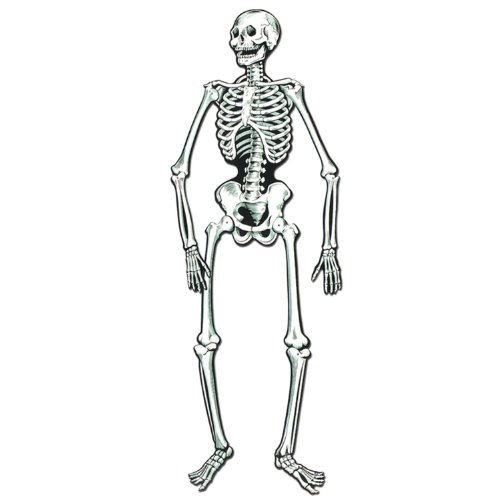 Halloween Skeletons - Jointed Skeletons   (2/Pkg)