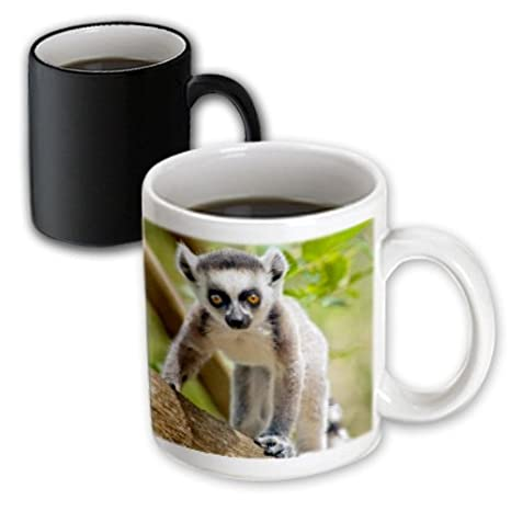 White Anja private community reserve Madagascar Green Mug 11 oz 3dRose 207009/_7 Baby ring-tailed lemur