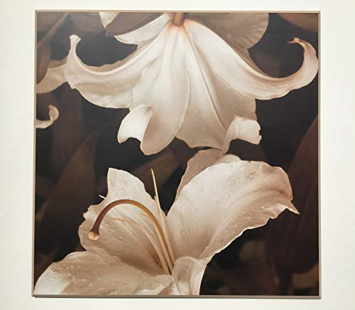 Framed Lily Flowers Photograph Laminated on Wood Home Decor Modern Look