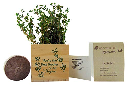 Teacher Plant Appreciation Gift Best of All Thyme Pot Wooden Cube Set, 4 inch