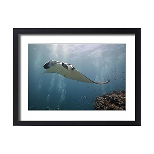 Feeding Frenzy Feeding Station - Framed 24x18 Print of GM1E78B1S4N01 (5790176)