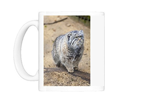 Pallas Cat (Photo Mug of Pallas cat, Otocolobus manu, Cotswold Wildlife Park, Costswolds, Gloucestershire)