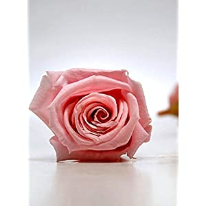 Preserved Roses (15 Rose Heads) 1 inch Pink - Excellent Home Decor - Outdoor Indoor 7
