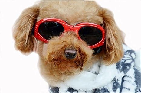 Amazon.com: Petleso Pet Goggles, Stylish Dog Sunglasses for ...