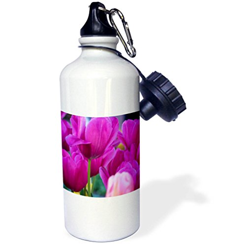 3dRose Danita Delimont - Flowers - Netherlands, Lisse, Magenta Tulips. - 21 oz Sports Water Bottle (wb_277729_1)