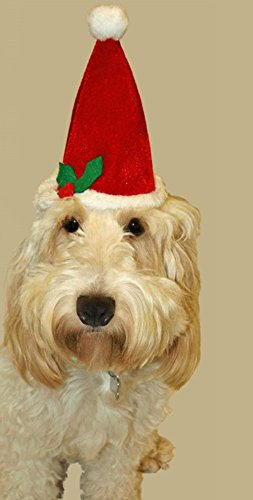 Gorro de Navidad mascotas - Gorro de Papá Noel de Adviento para gatos + de perros