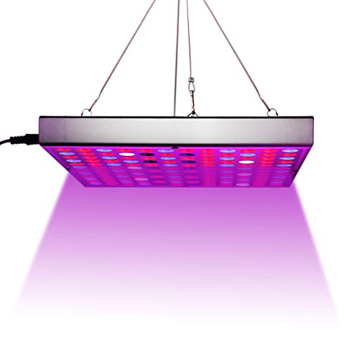 Best Led Light For Clones in US - 7