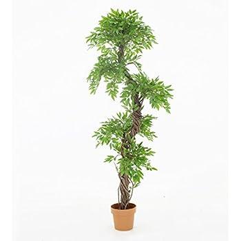 Amazon.com: Vert Lifestyle Handmade Japanese Fruticosa Indoor Tree ...