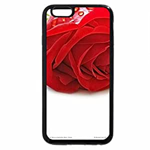 iPhone 6S Plus Case, iPhone 6 Plus Case, Red roses with Golden wedding rings.