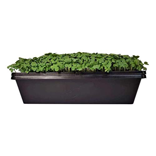 1010 Seed Tray - Extra Strength with Holes, 20 Pack, 10'' x 10'' Seedling Starter for Microgreens, Wheatgrass, Fodder, Hydroponic Growing, 1020 Trays by Bootstrap Farmer (Image #2)