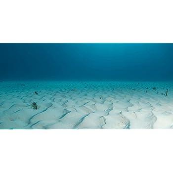 Undersea coral reef photo wall paper for Petsmart fish guarantee