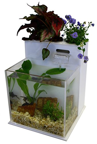 41c%2Bcn0ICOL - Fin to Flower Aquaponic Aquarium Mini System A