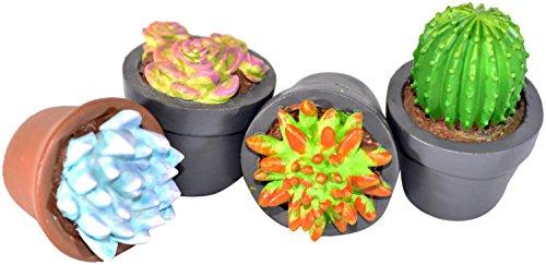 G & F Products G & F 10062 MiniGardenn Fairy Garden Miniature Succulent Plants, 4 Pieces