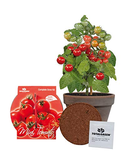 TotalGreen Holland Special Mini Tomato Grow Kit | Grow Fresh Mini Tomato Seeds Indoors | Great Gift Item | Grow Your Own Mini Tomato Plants in Unique Basalt Pot | Exclusive Kit by TotalGreen Holland ()