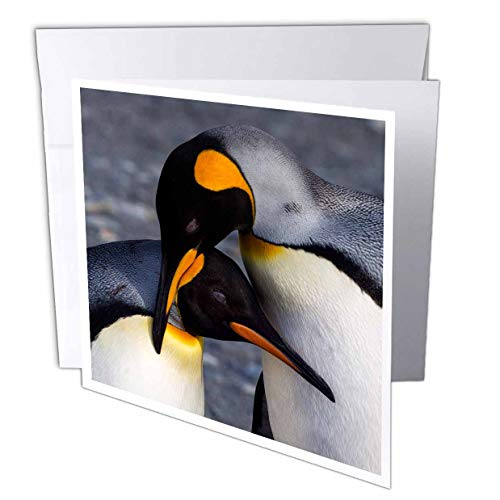 3dRose Danita Delimont - Penguins - Antarctica, South Georgia is. St. Andrews Bay, Pair of King Penguins - 6 Greeting Cards with envelopes (gc_312583_1)