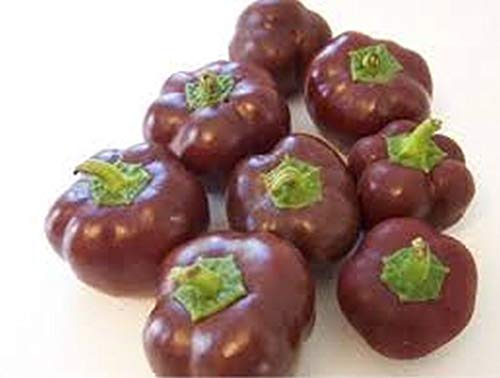 Mini Chocolate Bell Pepper Seeds (40 Seed Pack)