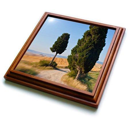 danita-delimont-italy-winding-road-val-d-orica-tuscany-italy-8x8-trivet-with-6x6-ceramic-tile-trv-22