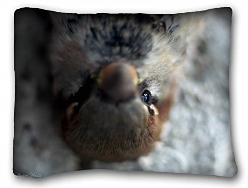 Custom Characteristic ( Animals pigeon view feathers ) Pillow Covers Bedding Accessories Size 20