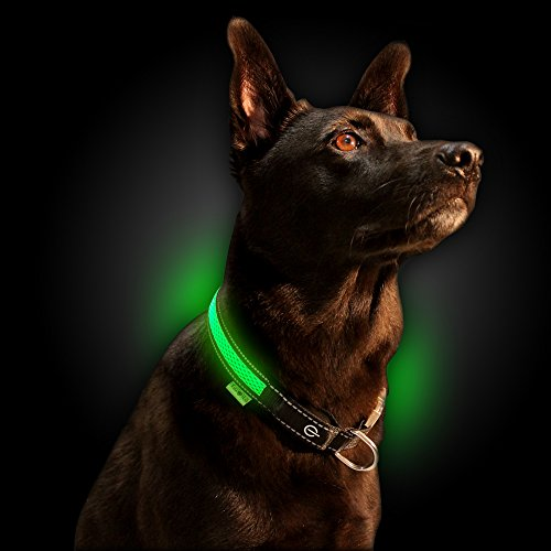 NINJA PETS Metal Buckle LED Dog Collar, USB Rechargeable, for Small Medium Large Dogs, Dog Collar Lights for Night Time Safety, Quick Release (Small, Lime Green)