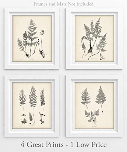 Ferns - Set of 4-11x14 Unframed Art Prints - Great Home Decor