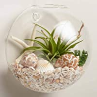 CeraGLo Hanging Crystal Clear Glass Ball Vase Flower Planter Pot/Terrarium Container/Fish Bowl (1 No)