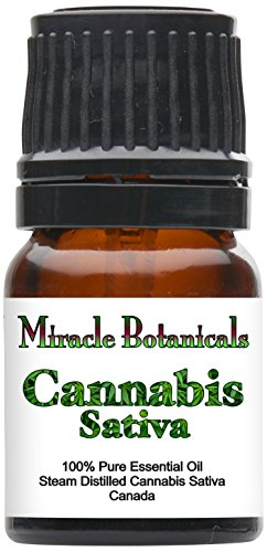 Miracle Botanicals Cannabis Sativa Essential Oil   100  Pure Cannabis Sativa   Therapeutic Grade   2 5Ml