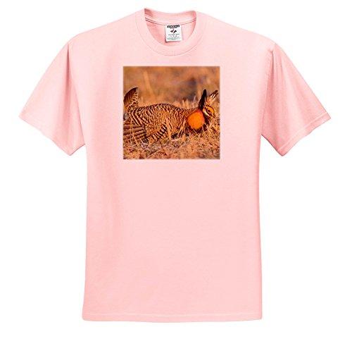 - 3dRose Danita Delimont - Birds - Greater Prairie Chicken In Mating Display, Prairie Ridge, Illinois - T-Shirts - Toddler Light-Pink-T-Shirt (4T) (TS_279002_49)