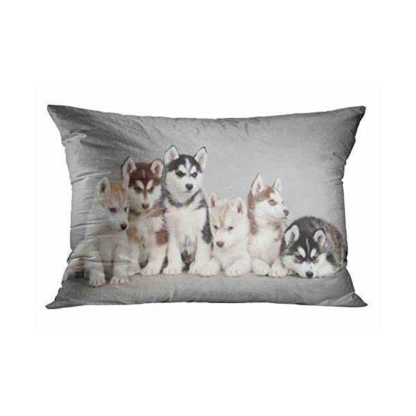 Tarolo Home Decor Pillow Cover Case Cute Siberian Husky Puppies Decorative Pillowcase Pillow Covers Cases 20x30 Inches Two Sided Print 1