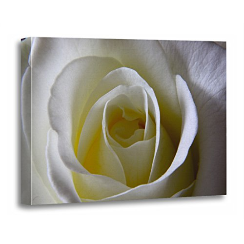 (TORASS Canvas Wall Art Print Classic White Rose English Garden Roses Wedding Artwork for Home Decor 24