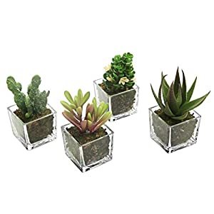 MyGift Set of 4 Mini Artificial Fig Cactus and Assorted Succulent Plants with Clear Glass Pots 3