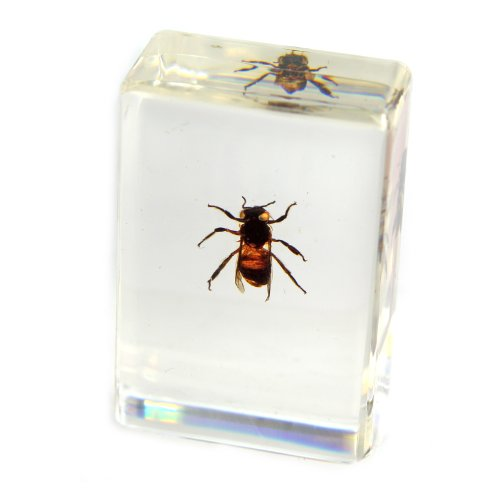 Paperweights Acrylic Paperweight (Honey Bee Paperweight (1 1/8 x 1 3/4 x 3/4