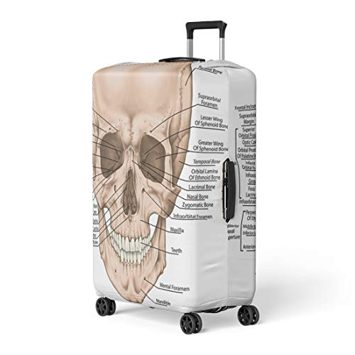 - Semtomn Luggage Cover the Bones of Cranium Head Skull Boundaries Facial Skeleton Viscerocranium Travel Suitcase Cover Protector Baggage Case Fits 18-22 Inch